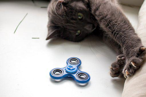 Spinner, Cat, Toy, The Top, Grey, Home