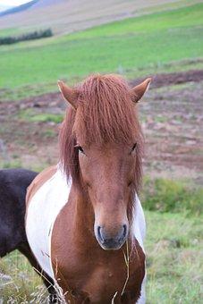 Horse, Head, Brown, White, Grass, Farm, Nature