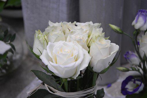 Flower, White Roses, Nature, Offer, Purity