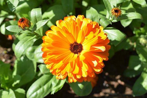 Orange, Flower, Green, Macro, Plant, Blossom, Summer