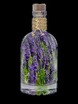 Lavender, Bottle, Plant, Spring, Purple, Nature, Field