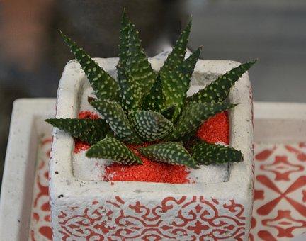 Plant, Cactus, Nature, Green, Vegetation, Succulent