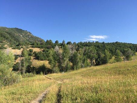 Trail, Trees, Landscape, Nature