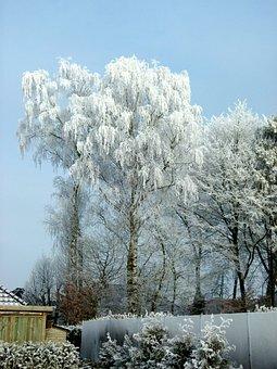 Winter, Ripe, Wintry, Cold, Frozen, Frost, Winter Dream
