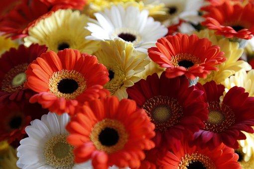 Flowers, Bloemendens, Belgian, Breeding, Propagation