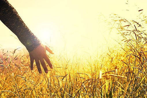 Hands, Grass, Peace, Road, Tranquility, Field