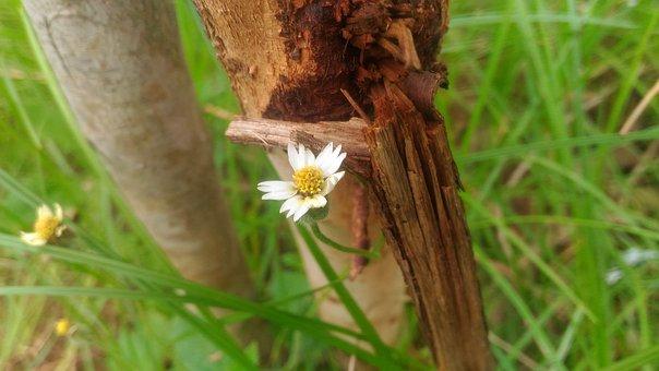 Flowers, Floral, Nature, Spring, Summer, Plant, Leaf