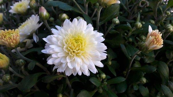 Plant, Flower, Flowers, Plants, Summer, Flowering