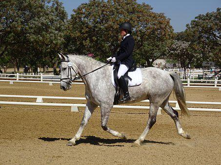 Horse, Show, Grey, Equestrian, Rider, Competition