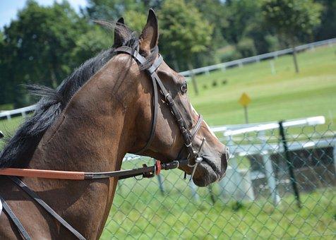 Horse, Horse Racing, Net, Reins, Guide