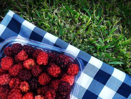 Raspberries, Blackberries, Picnic, Red Fruits