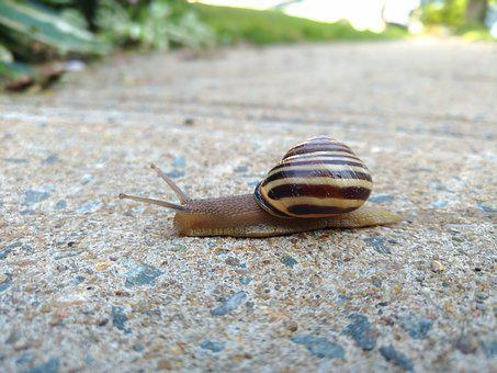 Snail, Nature, Animal, Shell, Crawling, Wildlife