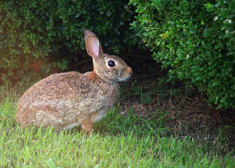 Rabbit, Grass, Nature, Spring, Bunny, Lawn, Happy, Hare