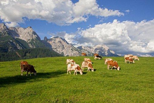 Alm, Pasture, Mountains, Clouds, Cow, Summer, Landscape