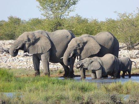 Elephant, Africa, Safari, Herd Of Elephants, Animal