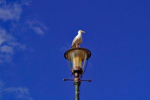 Lamppost, Street Lamp, Day, Bird, Gull, Spotter
