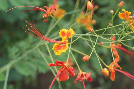 Flower, Fire Tree, Summer, Bloom, Nature, Landscape