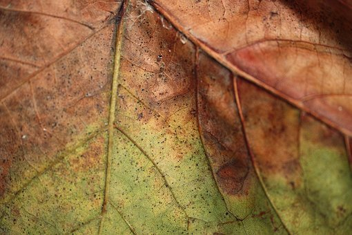 Leaves, Detail, Old, Dried Up, Autumn, Macro, Plant