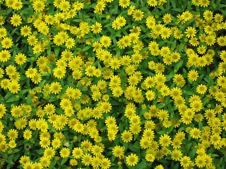 Yellow, Flowers, Wild Flowers