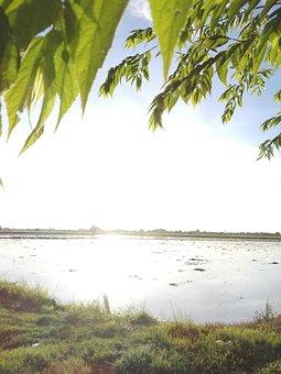 Cornfield, Sky, Green, Agriculture, Outdoor, Sunlight