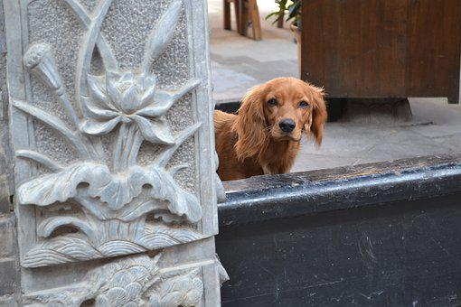 Dog, Asia, Doorway, Cute, Happiness, Friend, Animal