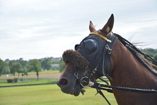 Horse, Horse Racing, Reins, Net, More, Bonnet