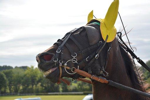 Horse, Horse Racing, Bonnet Yellow, Net, More
