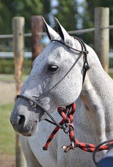 Horse, Sport, Horseback Riding, Competition, Horses