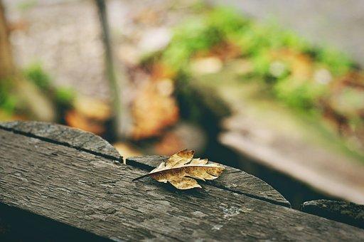 Nature, Leaf, Yellow, Plants