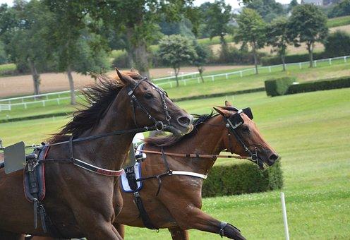 Horse, Race Horses, Dressage, Mane, Head, Profile