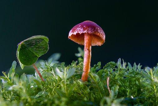 Mushroom, Mini Mushroom, Sponge, Moss, Forest Mushroom