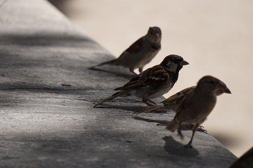 Bird, Birds, Ave, Park, Nature, Fauna, Little Bird
