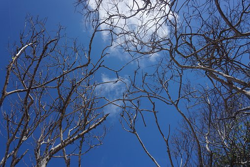 Tree, Tropical, Beach, Blue, Sky, Nature, Summer, Sea