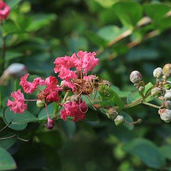 Bee, Flower, Honey, Pink, Red, Plant, Plants, Tree