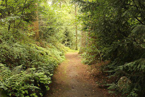Path, Way, Light, Trees, Pathway, Road, Journey