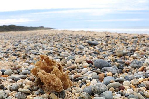 Shell, Seashell, Sea, Ocean, Beach, Nature, Shellfish