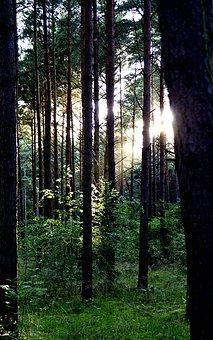 Forest, Tree, Vegetation, Shrubs, Green, The Rays