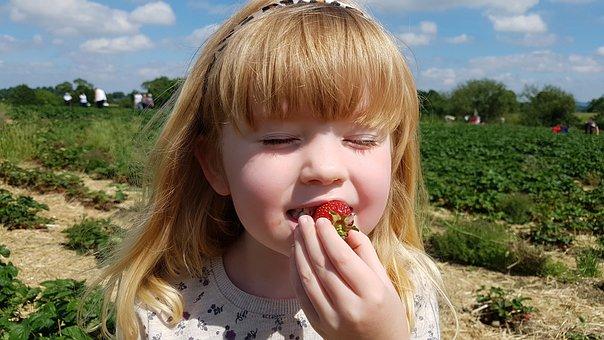 Strawberry, Fields, Picking, Berry, Farm, Organic