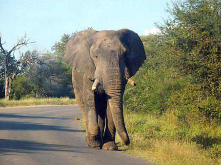 Elephant, Animal, Nature, Wild Animal, Large, Colossus