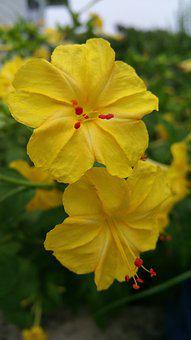 Yellow Flowers, Flower's, Red