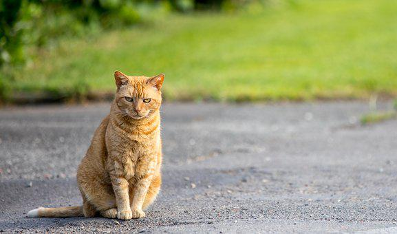 Cat, Road, Animal, Cute, Pet, Domestic, Fur, Adorable