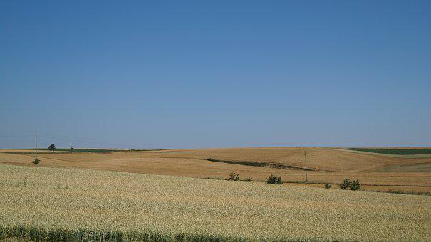 Field, Summer, View, Agriculture, Village, Nature