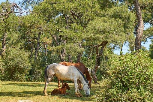 Horse, Nature, Animal, Cute, Mammal, Animal Head