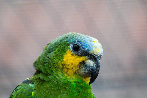 Parrot, Bird, Colorful, Color, Animal, Spring, Bill