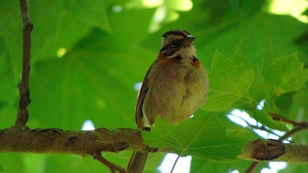 Bird, Nature, Tatu, Tropical Birds, Birdie, Animals