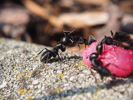 Ant, Ants, Insect, Nature, Close, Animal