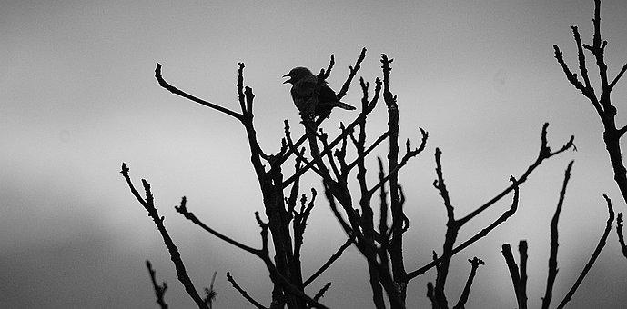 Image, Black And White, Ave, Bird
