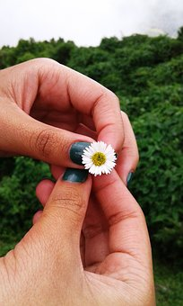 Nature, Flower, Hands, Plant, Beauty, Green, Landscape