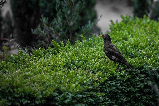 Black Bird, Bird, Nature, Black, Wildlife, Animal, Wild