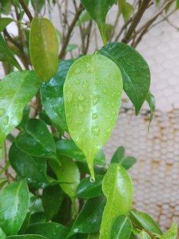 Leaf, Droplets, Green, Branches, Rain, Drop